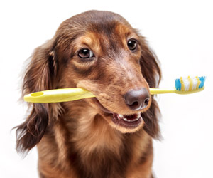 The Animal Clinic of Encino Dentistry